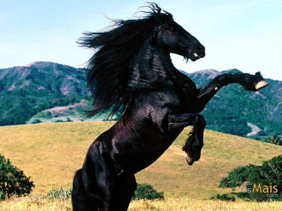 Cavalo_Preto_(2)